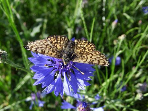 photos fleurs sauvages et papillon sylvie le brigant