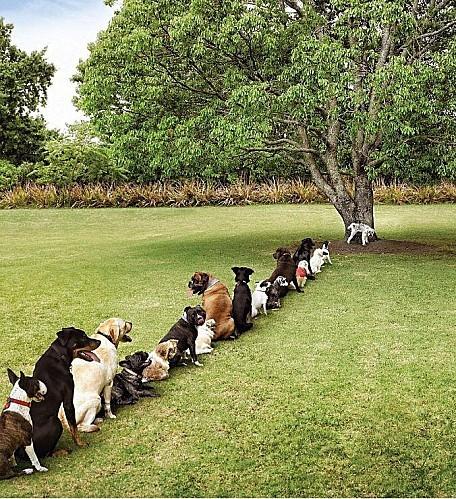 cutting-trees.jpeg