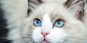 Les champignons chez le chat - Symptômes et traitement