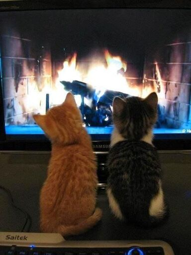 Watching the fire. Cuddling by the fireplace