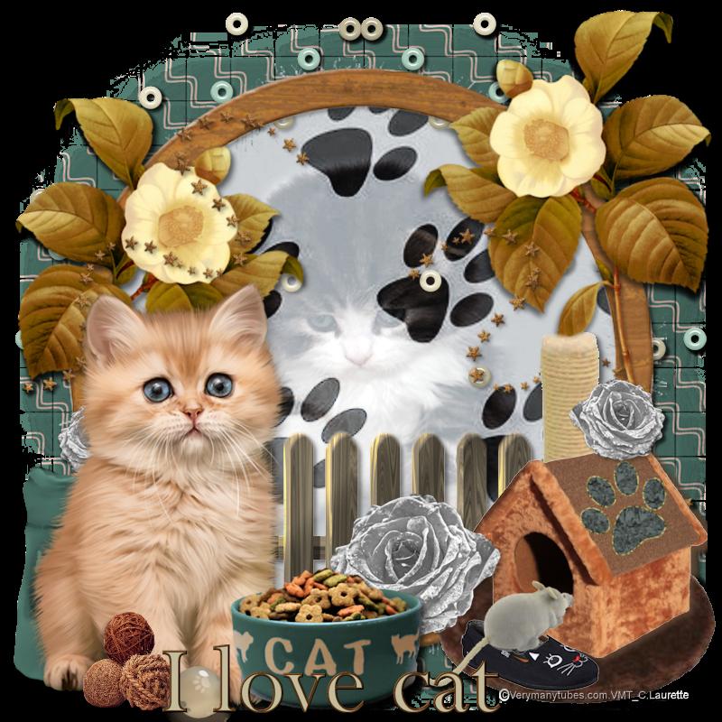 ILove Cat refait