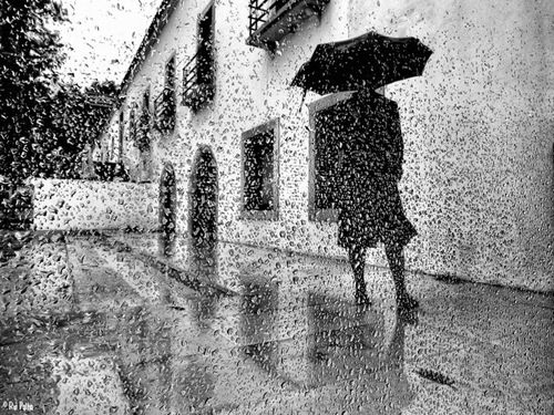 Rui Palha et la pluie