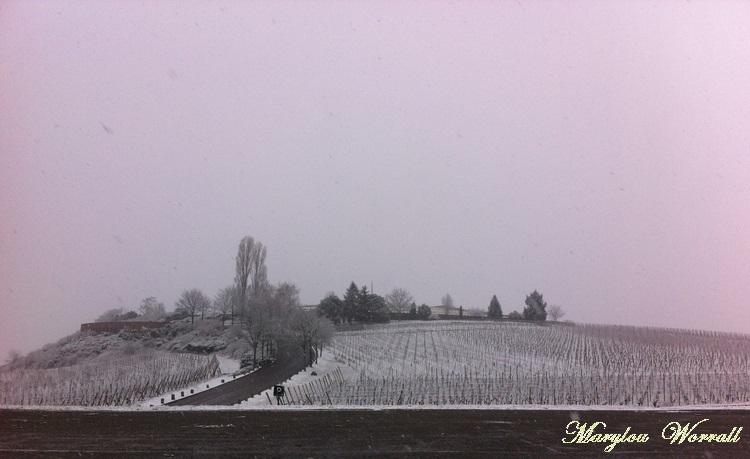 Sigolsheim : La nécropole 2/2