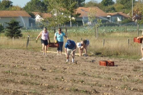 ramassage de pommes de terre chez Fanny et Adrien