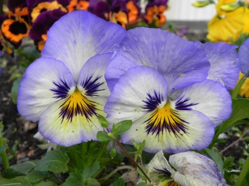 Mes fleurs de voyages