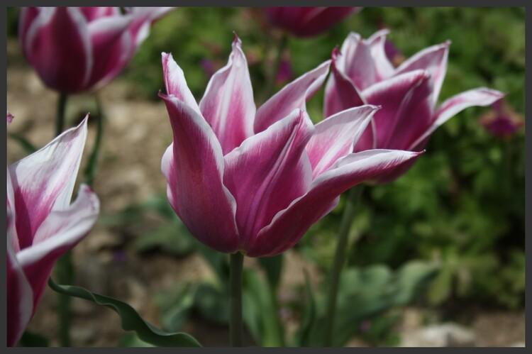 Pâques fleuri