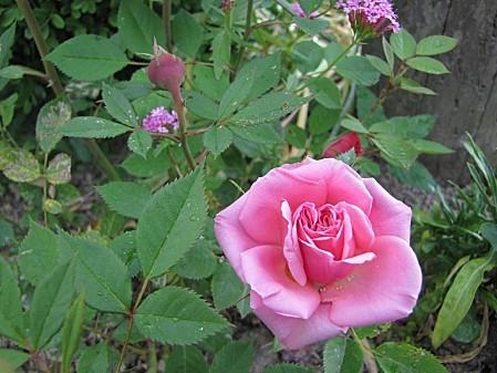 fleurs de chez ma grand mére (12)