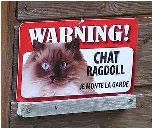 Un chat de garde