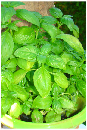 PESTO D'HERBE ROYALE