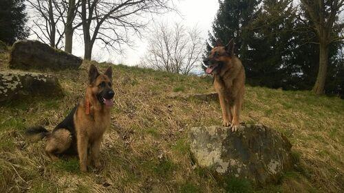 • balade avec les deux loups •