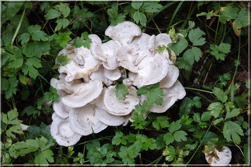 Automne savoyard : quelques champignons...