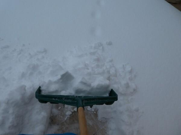 1er mars, ce matin c'était tout blanc !