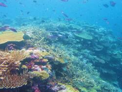 Hienghene Nouvelle Calédonie - Cliquer pour agrandir