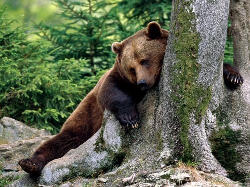 Journée des ours