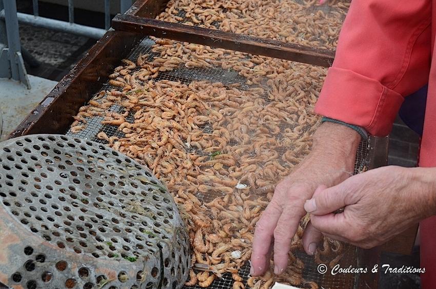 Tri et cuisson des crevettes