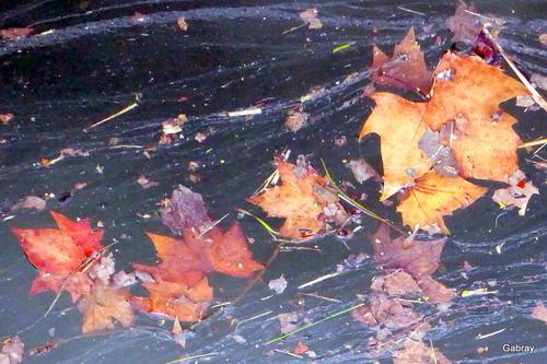 Des feuilles dans l'eau!
