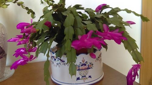 Quelques fleurs pour Jean Pierre