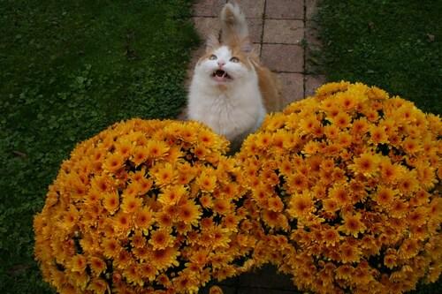 L'automne chez le rouquin .