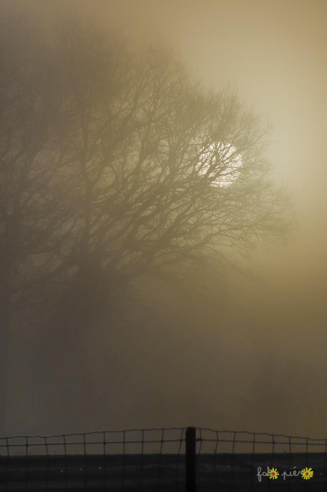 L'oeil était dans le brouillard et regardait le monde.