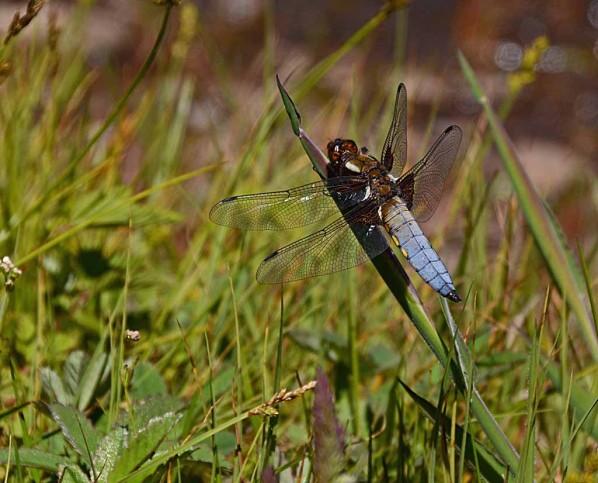 Insectes-papillons--4-8182_modifie-1.jpg