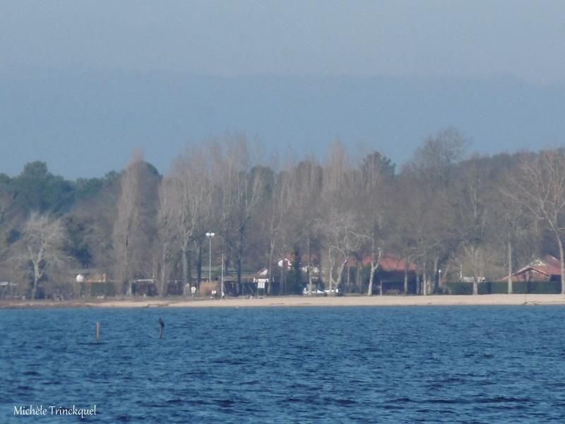 """Une balade à """"mon"""" Lac de LEON (40), le 23 février (suite)..."""