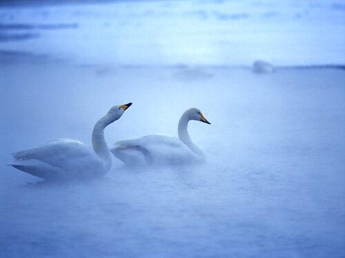 Gyönyörű téli képek