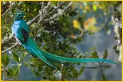 Le Quetzal l'Oiseau Roi