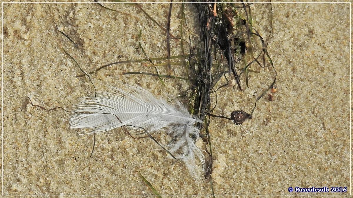 En longeant la plage entre Lanton et Cassy - fin Mars 2016 - 7/8