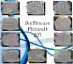 PictureIt 207 - Sniffmouse
