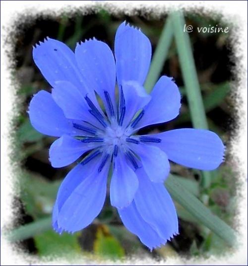 Ho ! La belle bleue !!!