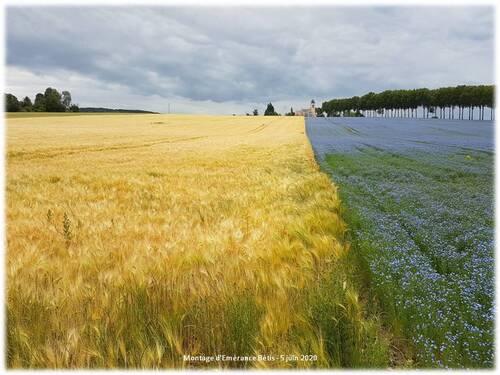 La plaine de Jouars tout en bleu et doré !