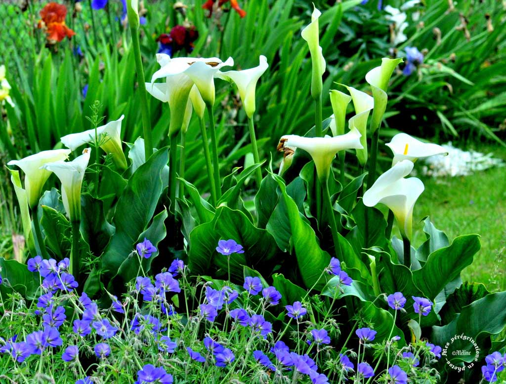 Dans mon jardin (1)