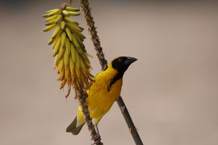 Quelques oiseaux de l'île de la Réunion