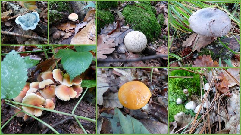 Promenade en Forêt.... 2/3