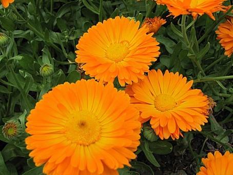 fleurs-4373.JPG
