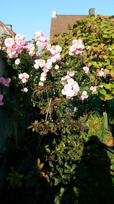 Au coeur de mon jardin 16
