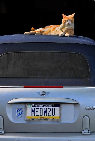 06 - Chats et voiture, en couleurs