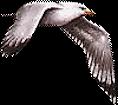 *** Birds ***