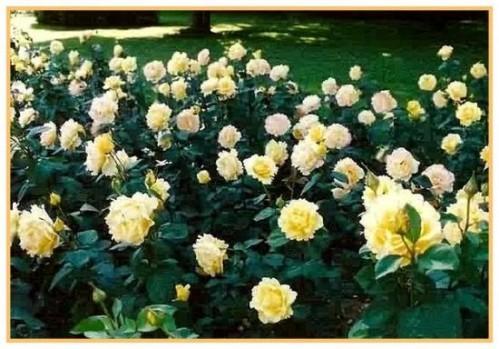 Rosesp ---Vendee-Globe---2660