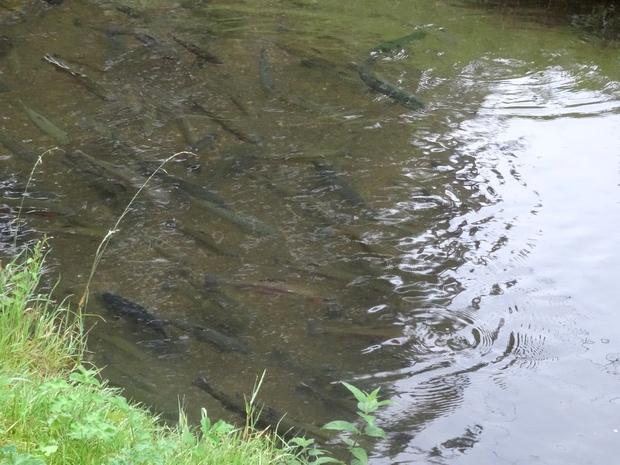 Découverte de la pisciculture de la Chouette à Aisey sur Seine, avec l'Office de Tourisme du Pays Châtillonnais
