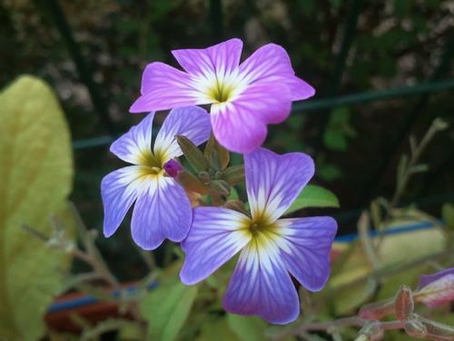 Mes fleurs parfumées