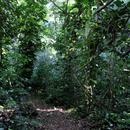 Balade sur le sentier forestier (1) - Photo : Yvon (Février 2015)