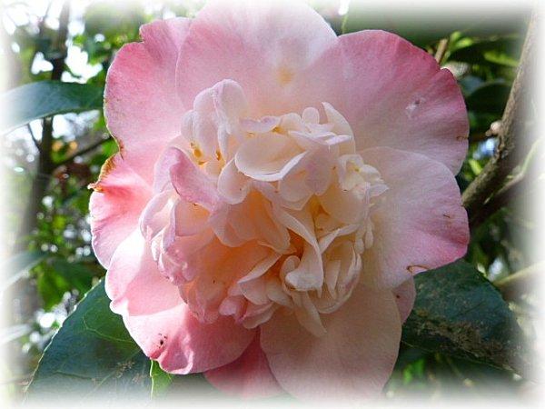 cam rose et blanc