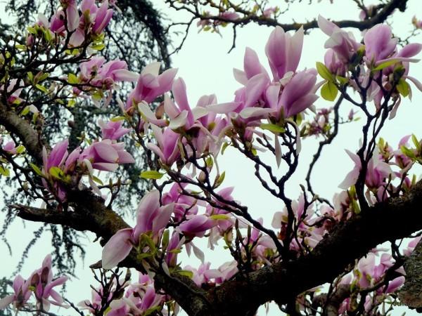 AZ13---Les-fleurs.JPG