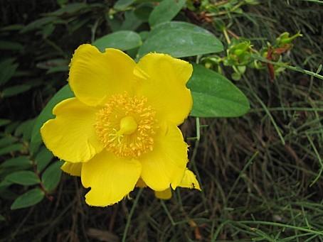 fleurs-4798.JPG