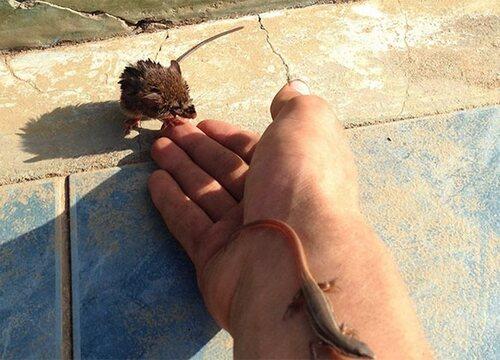 (-*♥*-)  Cette invention géniale sauve des animaux d'une mort terrible.(-*♥*-)