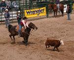 L'équitation western.