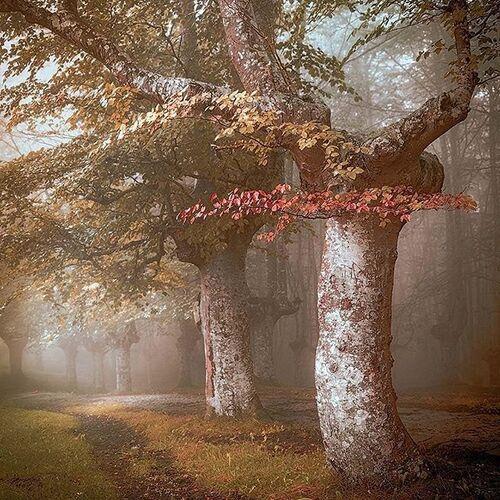 arbres magiques