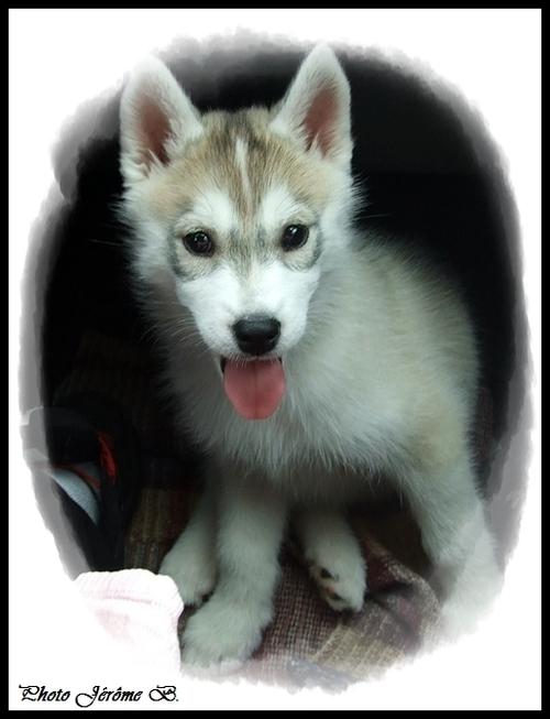 Ino (2 mois)