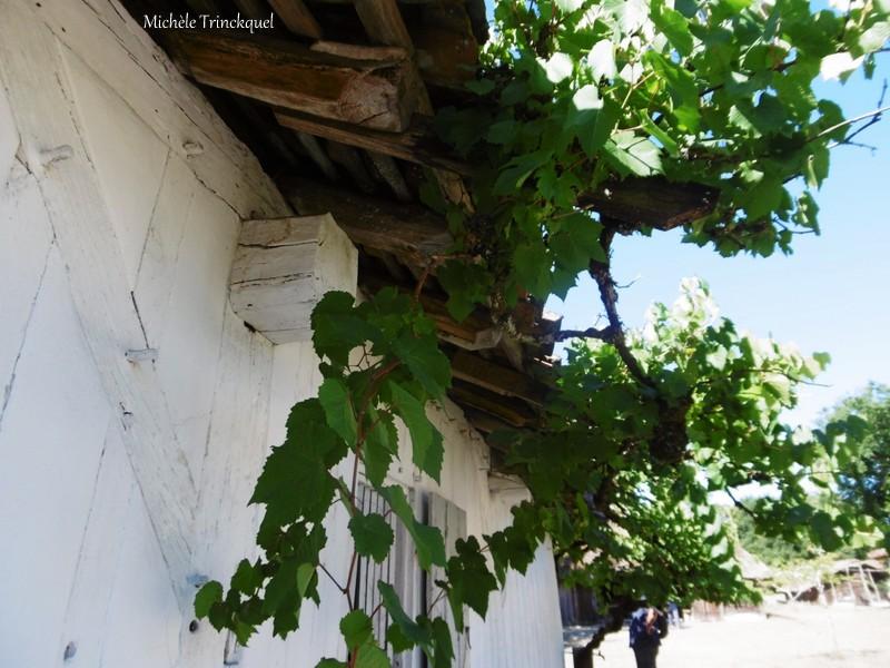 Une balade à l'Eco-Musée de Marquèze (40), le 3 septembre...